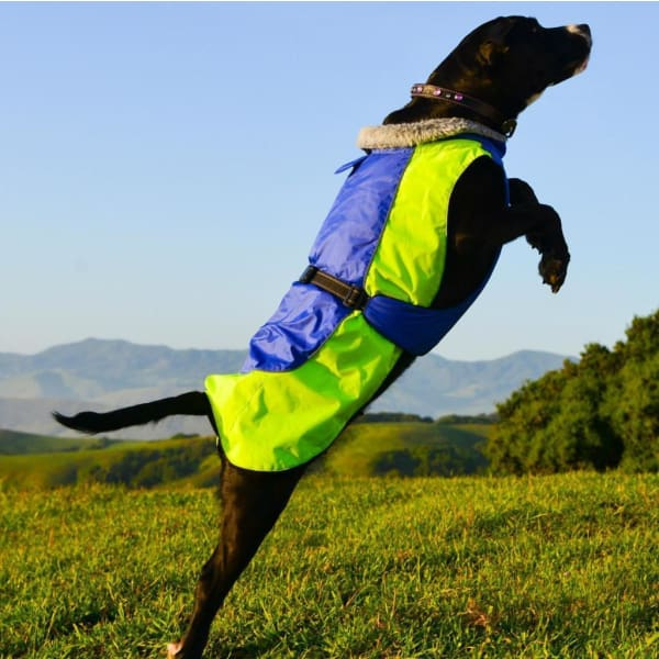 Alpine All Weather Dog Coat - Blue and Green - 2