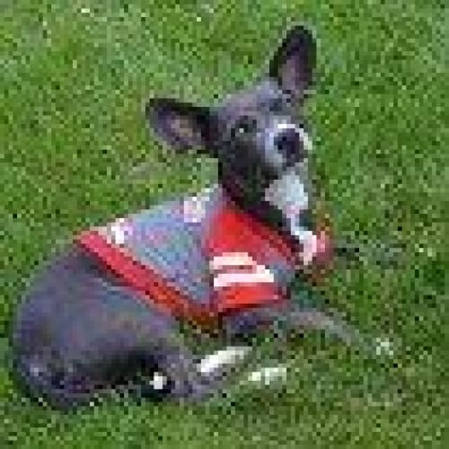 Atlanta Falcons Hoody Dog Tee - 2