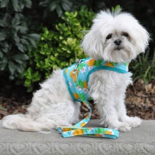 Dog Harness with Leash Pineapple Luau - Soft Dog Harnesses - 1