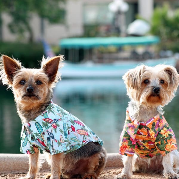 Hawaiian Camp Shirt for Dogs - Sunset Hibiscus - Dog Tee Shirts - 1
