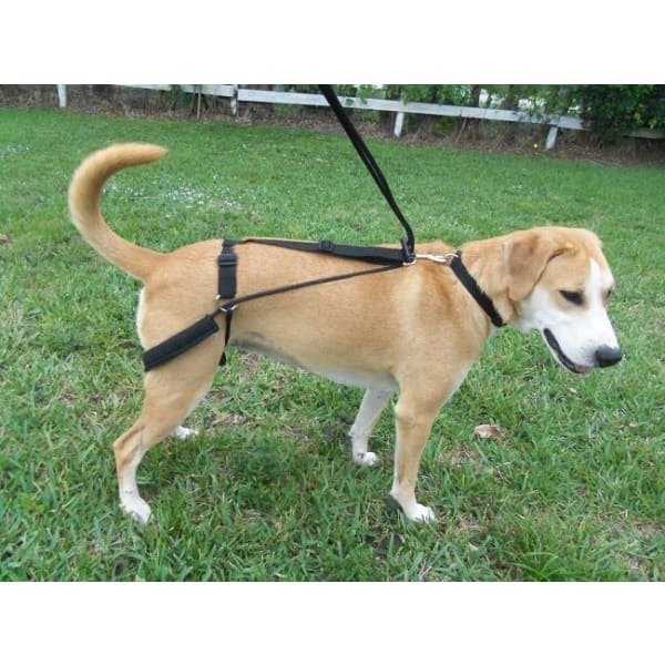 Horgan Dog Harness - 3