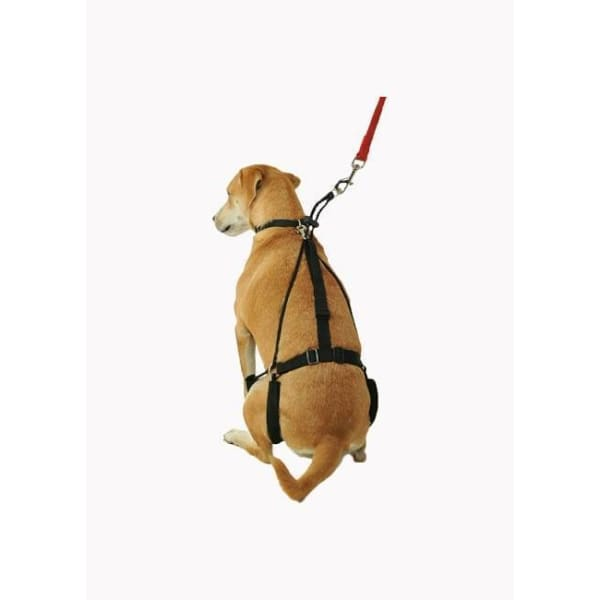 Horgan Dog Harness - 2