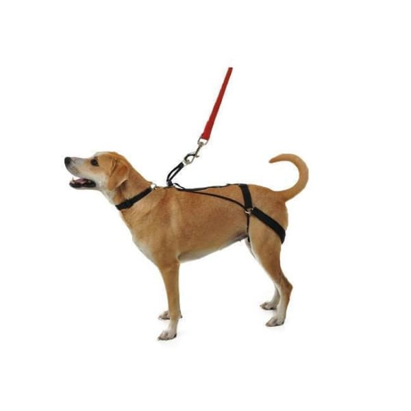 Horgan Dog Harness - 1