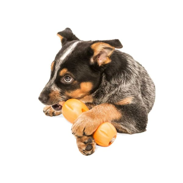 Qwizl Treat Dog Toy - Indestructible & Tough Dog Toys - 4