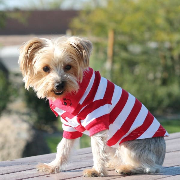 Striped Dog Polo - Flame Scarlet Red and White - Dog Tee Shirts - 1