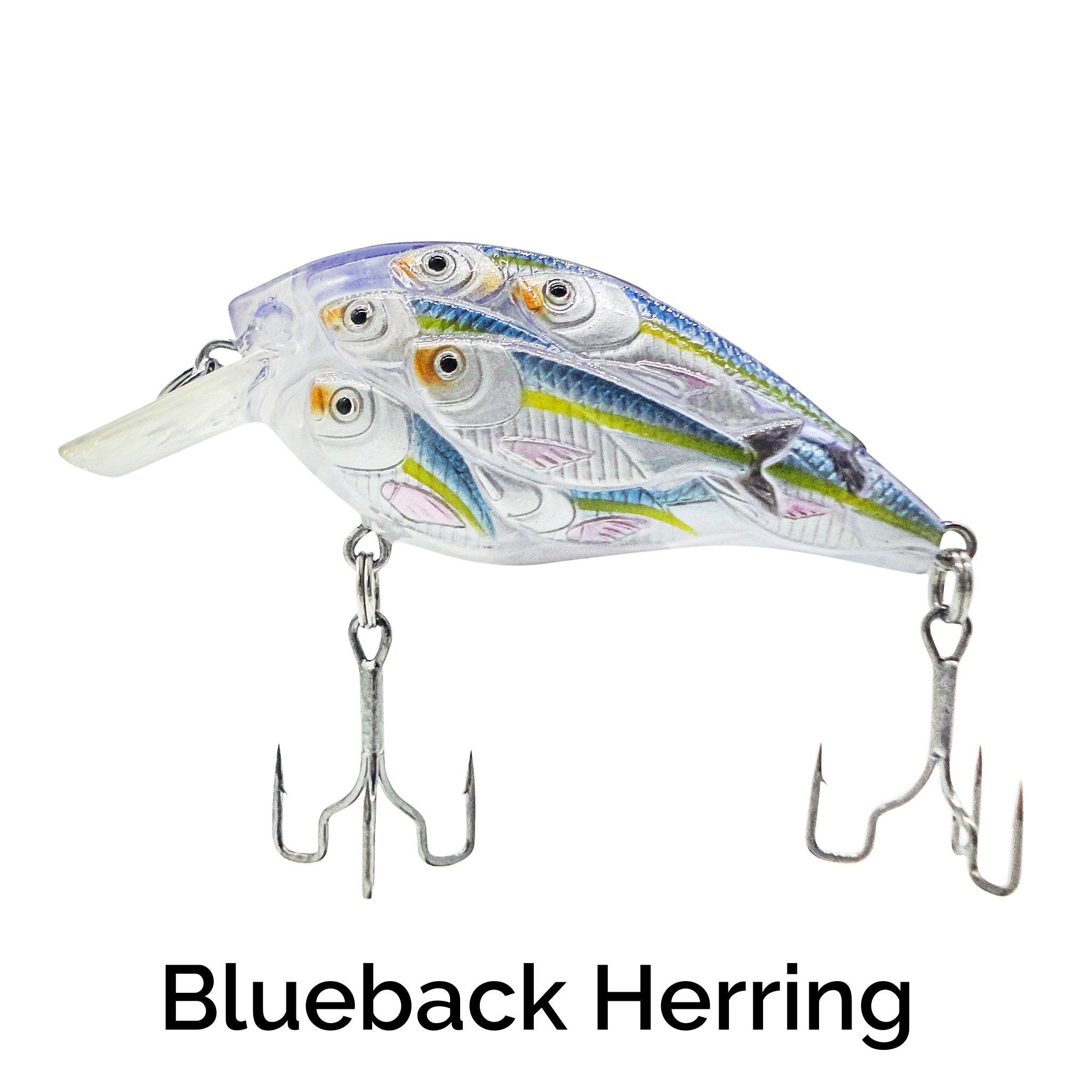 Trapper Schooling Squarebill Related Trapper Tackle LLC Blueback Herring