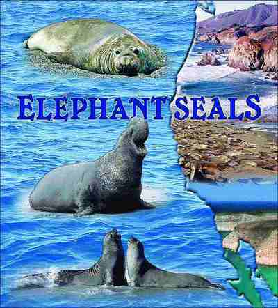 Elephant Seals Coverlet