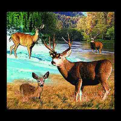 Lodge Mule Deer Pillow