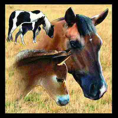 Horse Mare & Foal Pillow