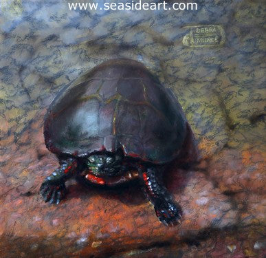 Painted Turtle is an oil painting by the artist, Debra Keirce