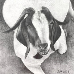 Adair-Hello, My Name is Penelope is an original graphite drawing by artist, Sue deLearie Adair