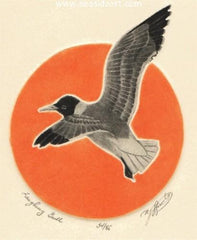 Laughing Gull is an etching by David Hunter