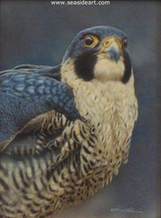 Proud - Peregrine Falcon is a watercolor and sterling silver painting by Rebecca Latham