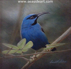 Purple Honeycreeper is a watercolor painting by Bonnie Latham