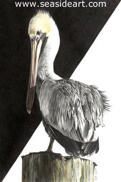Adair-Winter Pelican