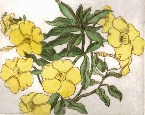 Allamanda by Carolyn A. Cohen - Seaside Art Gallery