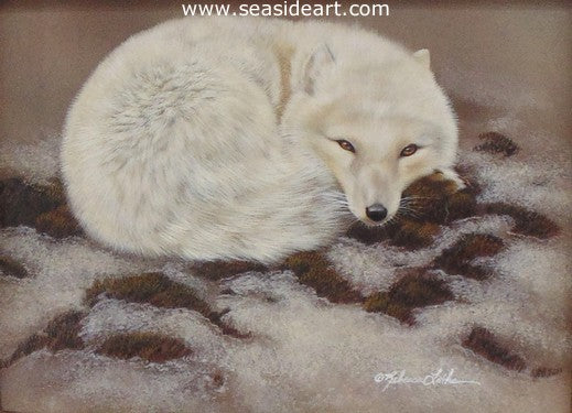 Arctic Nap - Arctic Fox by Rebecca Latham - Seaside Art Gallery