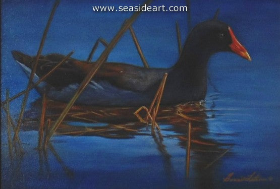Moorhen by Bonnie Latham - Seaside Art Gallery