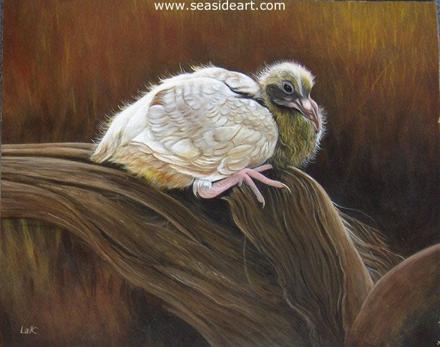 Baby Pigeon by N.W. Lalk - Seaside Art Gallery