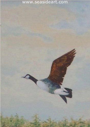 Canadian Goose in Flight by Fini Beunis - Seaside Art Gallery