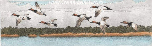Canvasbacks In Flight by David Hunter - Seaside Art Gallery