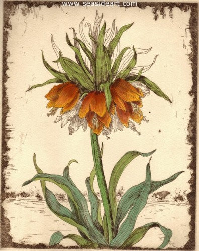 A-Crown Imperial by Carolyn A. Cohen - Seaside Art Gallery