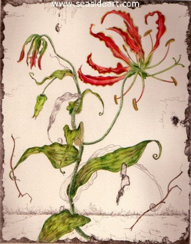 A-Gloriosa Lily by Carolyn A. Cohen - Seaside Art Gallery