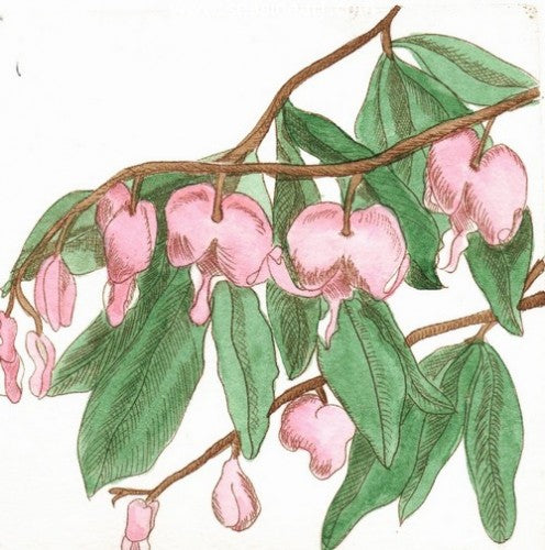 Japanese Bleeding Heart by Carolyn A. Cohen - Seaside Art Gallery