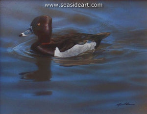 Blue Waters-Ring-necked Duck by Rebecca Latham - Seaside Art Gallery