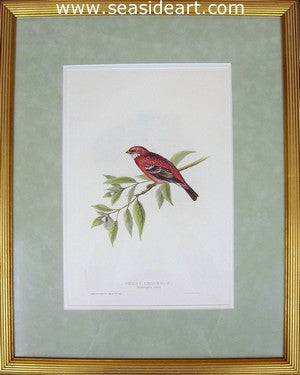Rosy Grosbeak by John Gould - Seaside Art Gallery