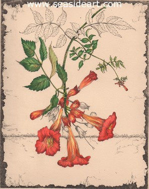 A - Trumpet Vine by Carolyn A. Cohen - Seaside Art Gallery