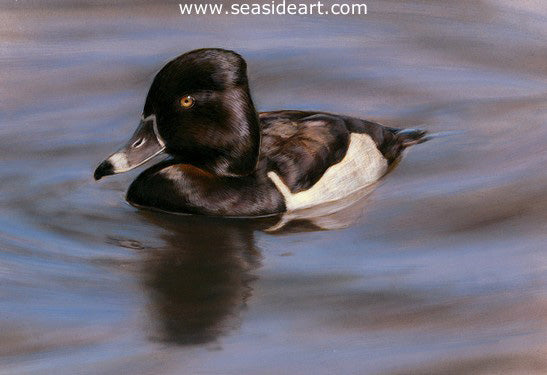 Wave Riders – Ring-necked Duck I by Bonnie Latham - Seaside Art Gallery
