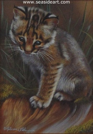 A Little Curious – Bobcat Kitten by Rebecca Latham - Seaside Art Gallery