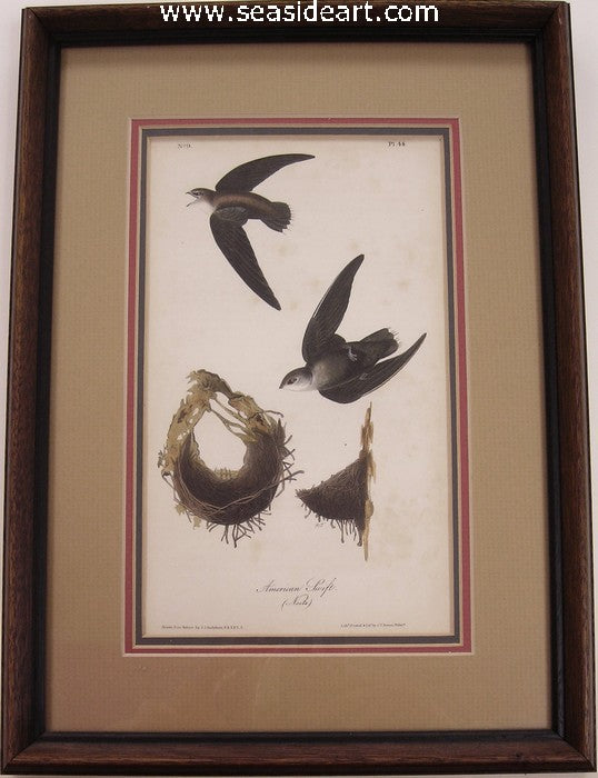 American Swift by John James Audubon - Seaside Art Gallery