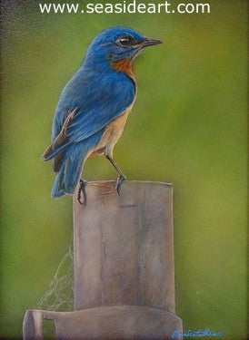 A Moment's Respite (Eastern Bluebird) by Bonnie Latham - Seaside Art Gallery