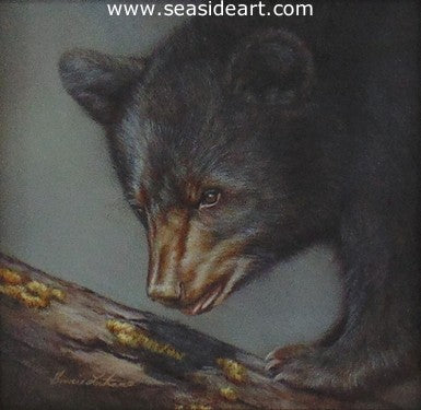 Eye On You (Black Bear) by Bonnie Latham - Seaside Art Gallery