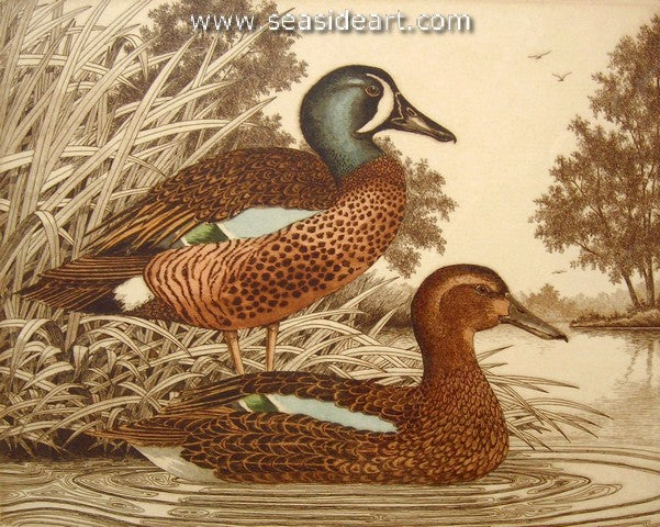 D-Blue-winged Teals II by David Hunter - Seaside Art Gallery