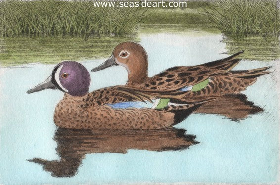 D-Blue-winged Teals IV by David Hunter - Seaside Art Gallery