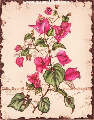 A-Bougainvillea by Carolyn A. Cohen - Seaside Art Gallery