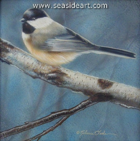 Contentedly Perched (Chickadee)
