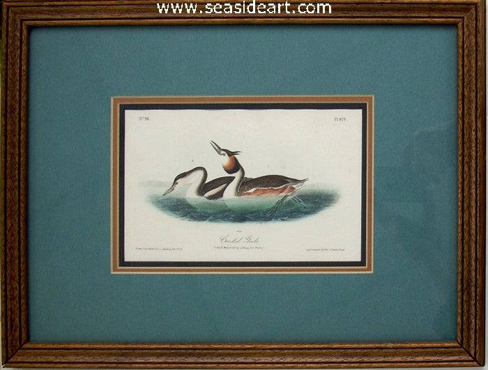 Crested Grebe by John James Audubon - Seaside Art Gallery