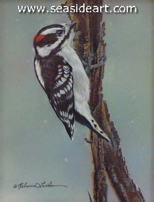 Soft Snow (Downy Woodpecker)