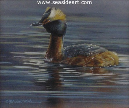Evening Diver (Horned Grebe)