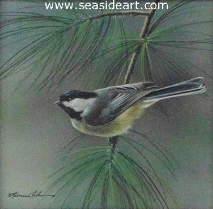 Evergreen Perch  (Chickadee)