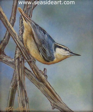 Explorations (Nuthatch) by Rebecca Latham - Seaside Art Gallery