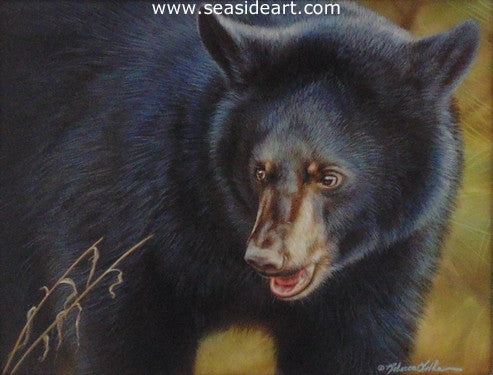 Explorer (Black Bear)
