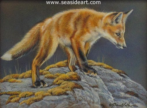 Exploring (Red Fox Kit) by Rebecca Latham - Seaside Art Gallery