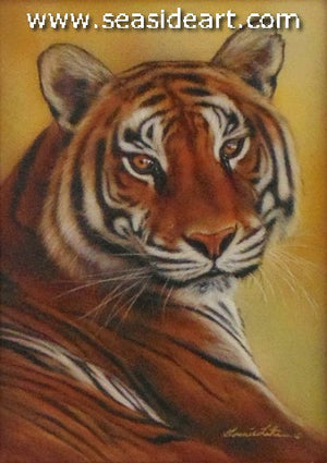 Fixated (Tiger)