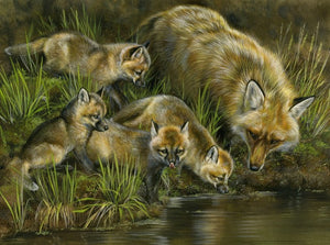 Water Play (Fox Family)