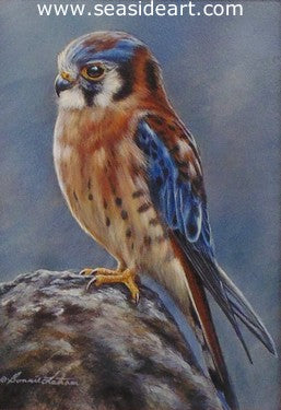 Fringe (American Kestrel) by Bonnie Latham - Seaside Art Gallery